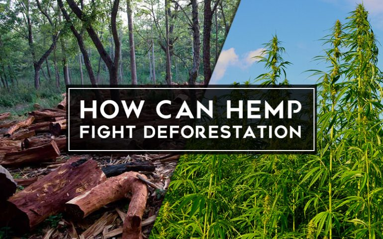 How Can Hemp Fight Deforestation