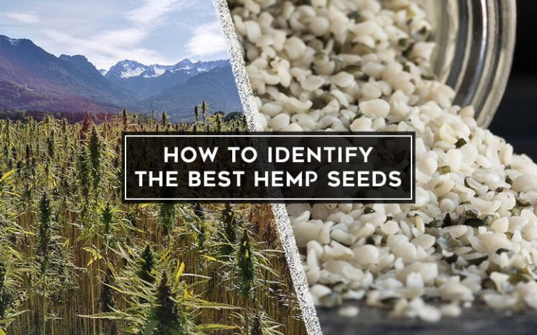 How to Identify the Best Hemp Seeds