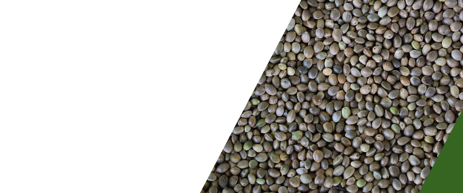 Un-Hulled Hemp Seeds