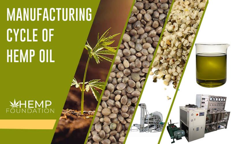 The Complete Cycle of Hemp Oil Manufacturing