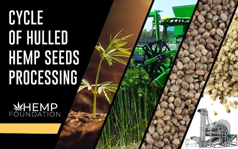 The Complete Cycle of Hulled Hemp Seeds Processing (US)