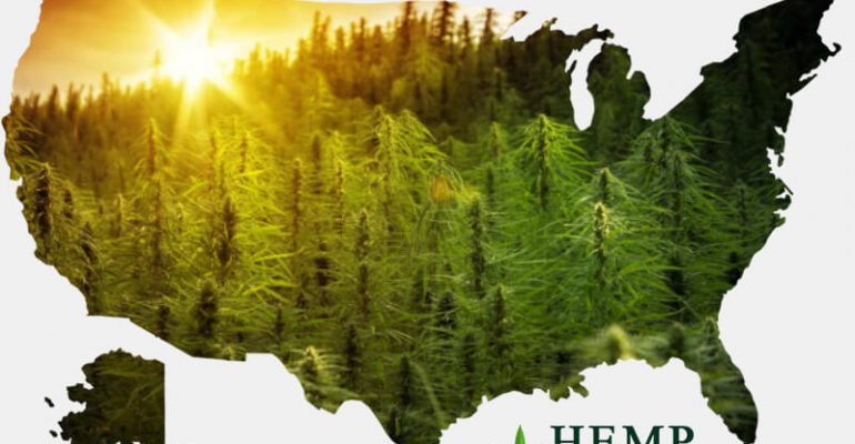How Regulation is the Biggest Hurdle for Hemp Industry in the US