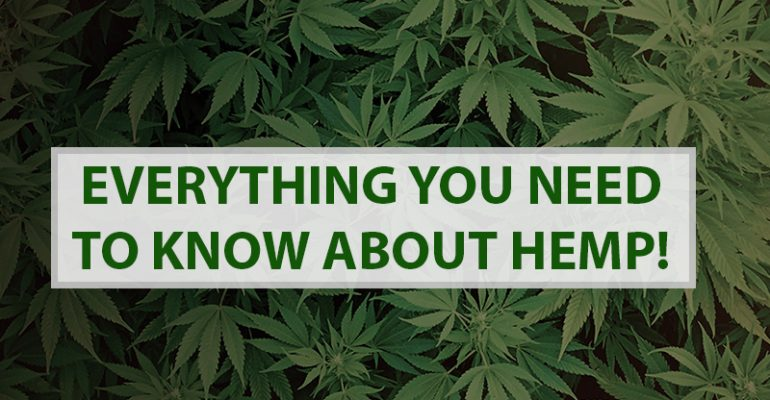 Everything You Need to Know About Hemp!