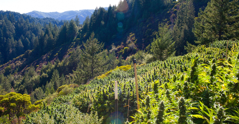 Here is How Hemp can Keep Climate Change at Bay