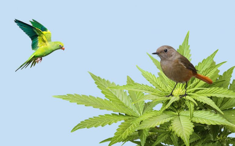 How Hemp Can Save Birds From Dying