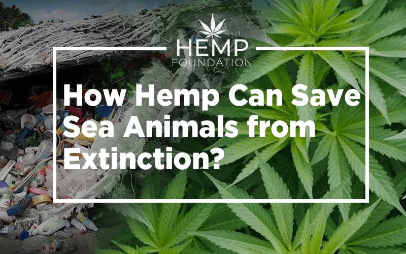 How Hemp Can Save the Sea Animals from Extinction