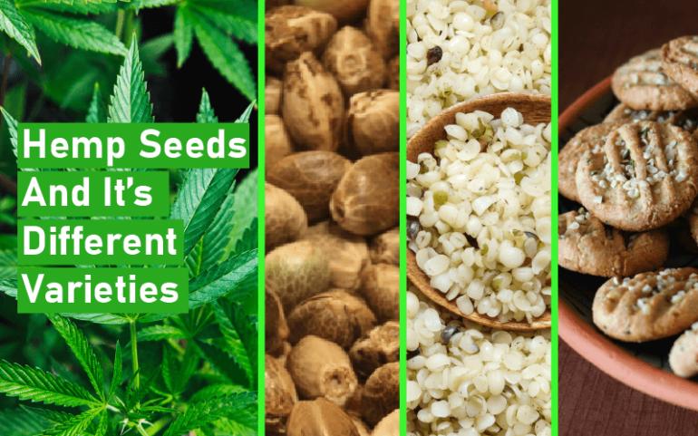 Hemp Seeds And It's Different Varieties