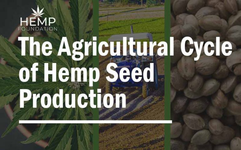 The Agricultural Cycle of Hemp Seed Production